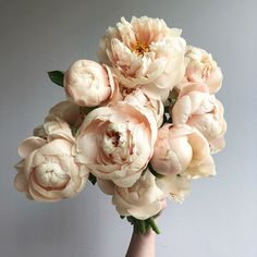 Bodacious Oregon-grown 'pastel elegance' peonies snatched up at today. Cut Flower Garden, Flower Farm, Wedding Bouquets, Wedding Flowers, Wedding Bride, Peonies Garden, Cut Flowers, Floral Arrangements, Beautiful Flowers