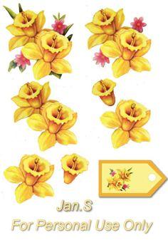 fleurs jonquilles Daffodil