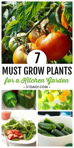 7 Must Grow Easy Plants for Every Kitchen Garden | 31Daily.com