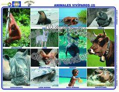 Imagenes de animales oviparos y viviparos Garden Sculpture, Fish, Dragon Ball, Outdoor, Animals, Middle, Study, Names Of Animals, School