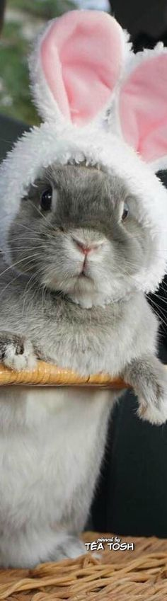 Cute bunny in clever disguise. Funny Bunnies, Baby Bunnies, Cute Bunny, Easter Bunny, Bunny Bunny, Hoppy Easter, Cute Baby Animals, Animals And Pets, Funny Animals
