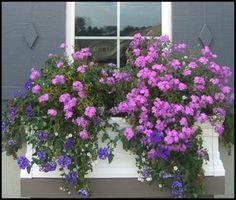 Plantas en ventanas