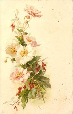pink & white dog-roses