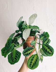 Intro to House Plants — Lee From America