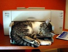 I don't know what happened. All I did was click print and a cat popped out.
