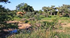 Shindzela Tented Safari Camp, Timbavati Tent Camping, Lodges, South Africa, Safari, Vineyard, Country Roads, Camps, Places, Outdoor