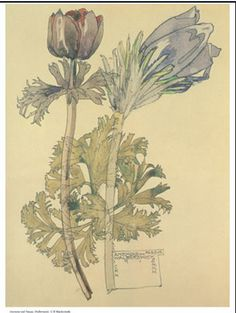 Charles Rennie Mackintosh, Anemone and Pasque