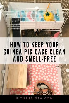 How to keep your guinea pig cage cleanYou can find Guinea pig care and more on our website.How to keep your guinea pig cage clean Diy Guinea Pig Cage, Guinea Pig Hutch, Guinea Pig House, Pet Guinea Pigs, Guinea Pig Care, Diy Guinea Pig Toys, Cages For Guinea Pigs, Caring For Guinea Pigs, Guinea Pig Food List