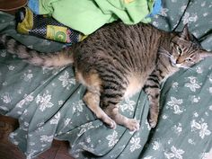 Today's cat on 27th Apr. 2012 by ganchan2, via Flickr