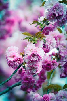 "sergeymihali: "" by radishhai "" Beautiful Flowers Garden, All Flowers, Pretty Flowers, Colorful Flowers, Fb Wallpaper, Flower Wallpaper, Ikebana, Paper Flowers Craft, Beautiful Flowers Wallpapers"