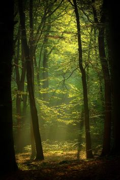 Just another world and universe citizen. Misty Forest, Forest Path, Tree Forest, Beautiful Landscapes, Beautiful Images, Gold Skies, Perfect World, Another World, Plein Air