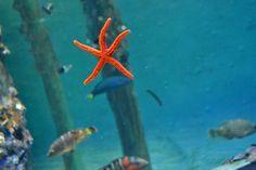 At the S.E.A. Aquarium in Sentosa