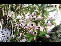 Jardim com orquídeas, antúrios, bromélias, avencas e rosas.