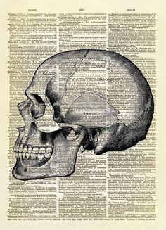 Human Skull Profile Dictionary Art Print