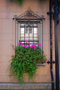 burglar bars for windows window security bars wrought iron window bars Window Box Flowers, Flower Boxes, Amazing Gardens, Beautiful Gardens, Window Security Bars, Burglar Bars, Window Bars, Iron Windows, Garden Windows