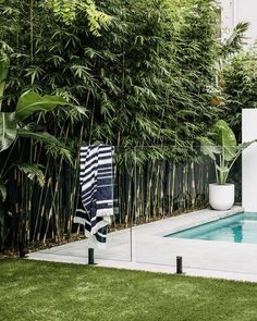 50 Adorable Tropical Landscaping Ideas For Garden - Have you ever dreamt of having a tropical landscaping? Living in a tropical area is a dream come true for many individuals. They don't have to deal wi. Plants Around Pool, Landscaping Around Pool, Tropical Pool Landscaping, Pool Plants, Privacy Landscaping, Backyard Pool Designs, Backyard Garden Design, Landscaping Design, Pool Backyard