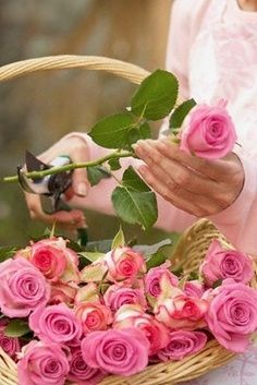 Sweet fragrance of roses from your own yard!