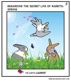 REGARDING THE SECRET LIFE OF RABBITS : Photo