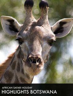 Roho Ya Chui, Swahili for Safari Adventure, I Have A Dream, African Safari, Highlights, Tours, Animals, Animales, Animaux, Luminizer