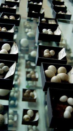 Bird Eggs | Flickr - Photo Sharing!
