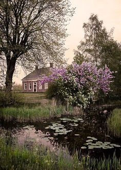 All things Europe — Groningen, Netherlands (by ImageSensors) Leiden, Rose Cottage, Rotterdam, Country Life, Beautiful Landscapes, Netherlands, Beautiful Places, Scenery, Places To Visit