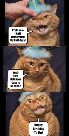 Happy Birthday Funny Cats, Happy Birthday Animals, Girl Birthday Themes, Cat Birthday, Animal Birthday, Funny Birthday Cards, Birthday Memes, Funny Happy, Happy Quotes Inspirational