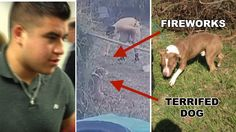 18-year-old idiot that threw FIREWORKS at chained dog gets to keep the pet! Act Now!