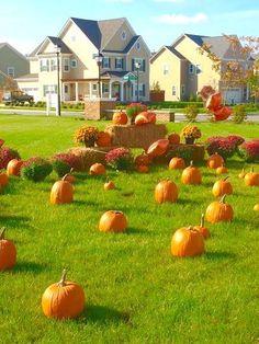 Bishard Homes Pumpkin & Mum Patch at Ashville Park Ranier Village Virginia Beach Condos, Special Events, New Homes, Pumpkin, Park, Outdoor, Outdoors, Gourd, New Home Essentials