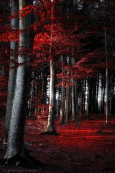crescentmoon06: red forest by dorothedomke