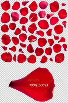50 Red Rose Petals Photo-realistic  —  PSD Template • Only available here! →…