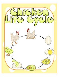 Life Cycle ~ Chicken Cool Science Experiments, Science Lessons, Science Projects, Kindergarten Science, Teaching Science, Chicken Life, March For Science, Monthly Themes, Forest School