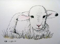 Line Drawing Of Sheep Face : Sheep realistic drawing step by google search and
