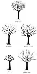 Pruning diagram - what the tree looks like before pruning, after thinning out, thinned out one year later, after topping, and topping one year later. Bonsai Pruning, Tree Pruning, Tree Diagram, Tree Structure, Bonsai Tree Types, Tree Felling, Plum Tree, Garden Landscape Design, Garden Trees