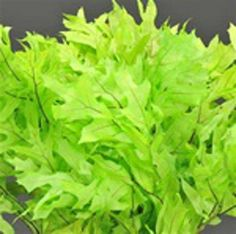 Transparent Oak Leaves - Chartreuse - 25 Bunches/case - WWW.MILLSFLORAL.COM