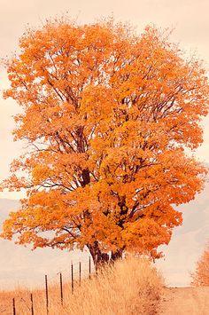 Items similar to Beautiful Autumn Nature Photograph, Orange leaved tree, Autum Art, Landscape Photography on Etsy Autumn Nature, All Nature, Autumn Day, Autumn Trees, Autumn Leaves, Seasons Of The Year, Belle Photo, Fall Halloween, Scenery