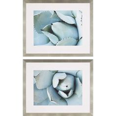 Agave Detail I By: Jerry, 27 x 33 In. Framed Art, Set of Two