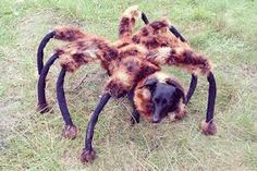 32 Purr fectly Cute Halloween Costumes For Pets To Look Spooky With Spider Dog Spider Prank, Spider Dog, Giant Spider, Pet Halloween Costumes, Pet Costumes, Dog Halloween, Halloween Ideas, Dog Runs, Find Pets