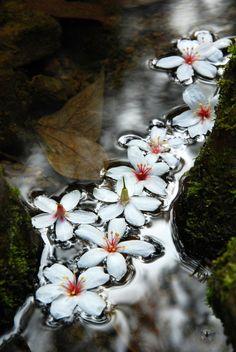 Floating~ flower trail