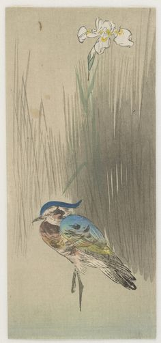 'Plover and Iris.' Woodblock print ( Meiji to Showa era, 20th century ) by Ohara Koson 小原古邨 (1877 - 1945). Image and text courtesy Freer Sackler.