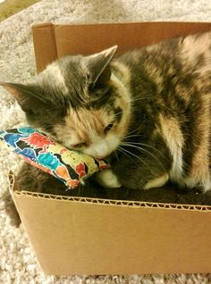 She's in a box and has a pillow with little cats on it. - credit to: swipurr.com