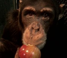 You Must Really Like Apples! - News - Bubblews