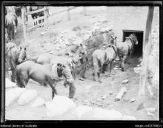 Pit Ponies Lithgow Valley Colliery