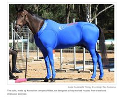 Horse in Compression Suit