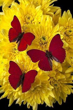Kelebekler butterflies