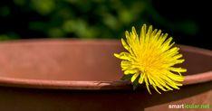 Keine Zeit für ausgiebige Wildkräuterwanderungen? Viele vitalstoffreiche Wildpflanzen kannst du alternativ auch in deinem Garten oder auf dem Balkon kultivieren.