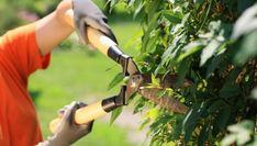 Garden care for autumn, - Garden Care - Tipos de Jardim Garden Care, Autumn Garden, Autumn Home, Gerbera, Peace Lily, Primroses, Little Plants, Real Estate Investor, Plant Needs