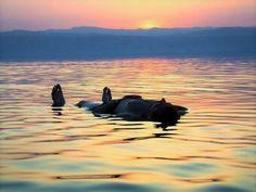 Mi Universar: Meciéndome sobre el mar (Redondillas)