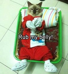 Funny, Memes, Pictures: funny-animals-66