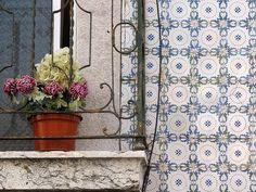 Window by delia