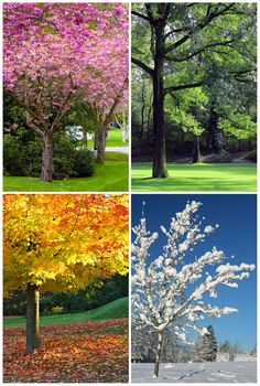 winter spring summer fall | ... asks: Why are the seasons called winter, spring, summer, and fall